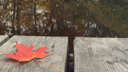 A maple leaf rests on a dock with a lake in the background