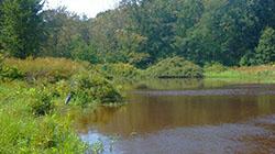 Niagara wetland