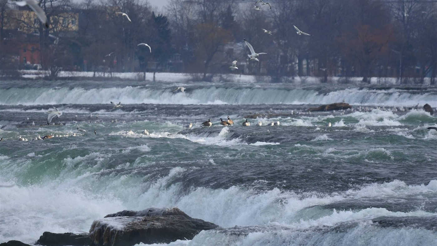 Niagara Falls winter birds, flowing falls and warm blue skies