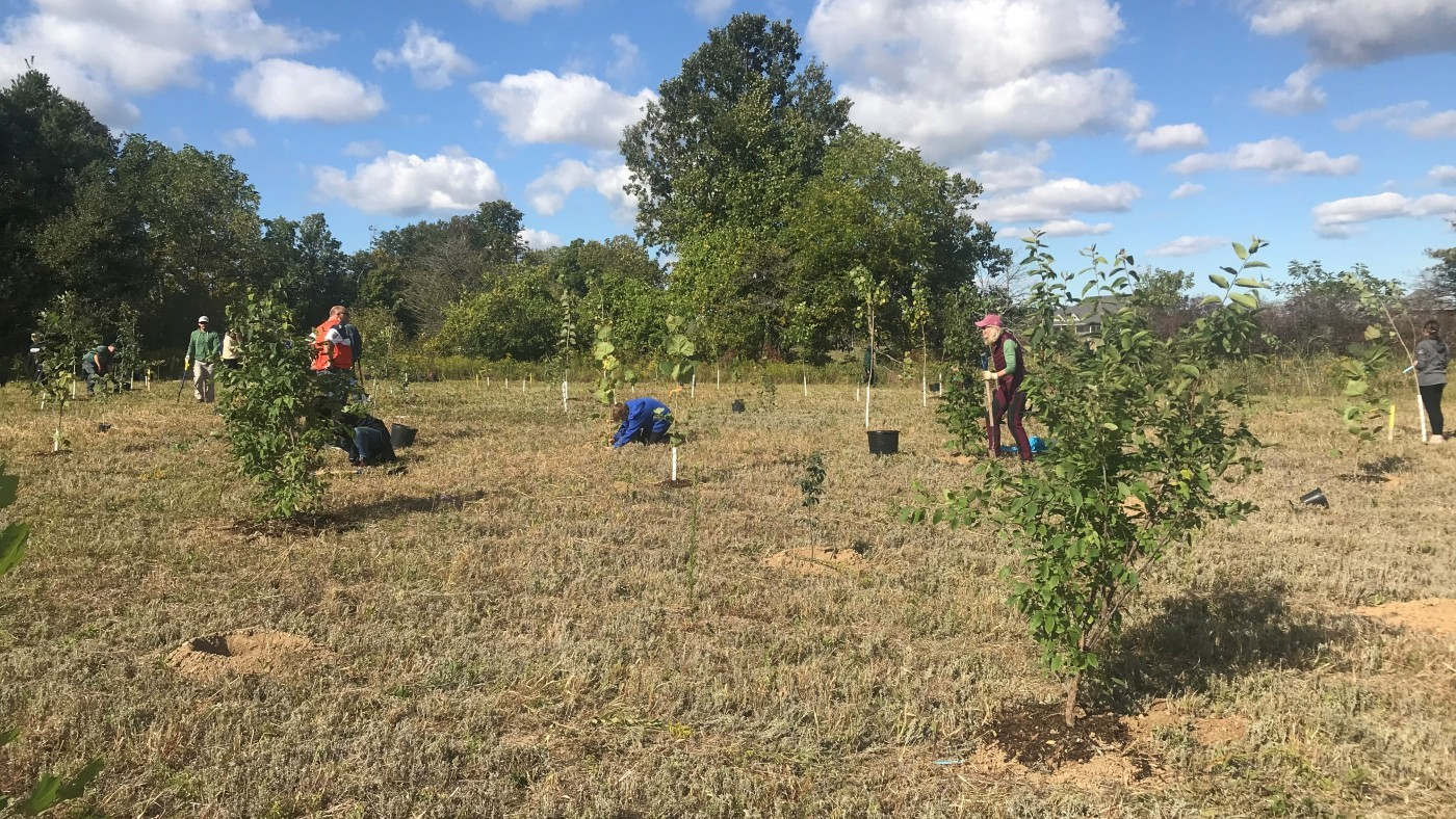 Binbrook planting- group of people planting trees