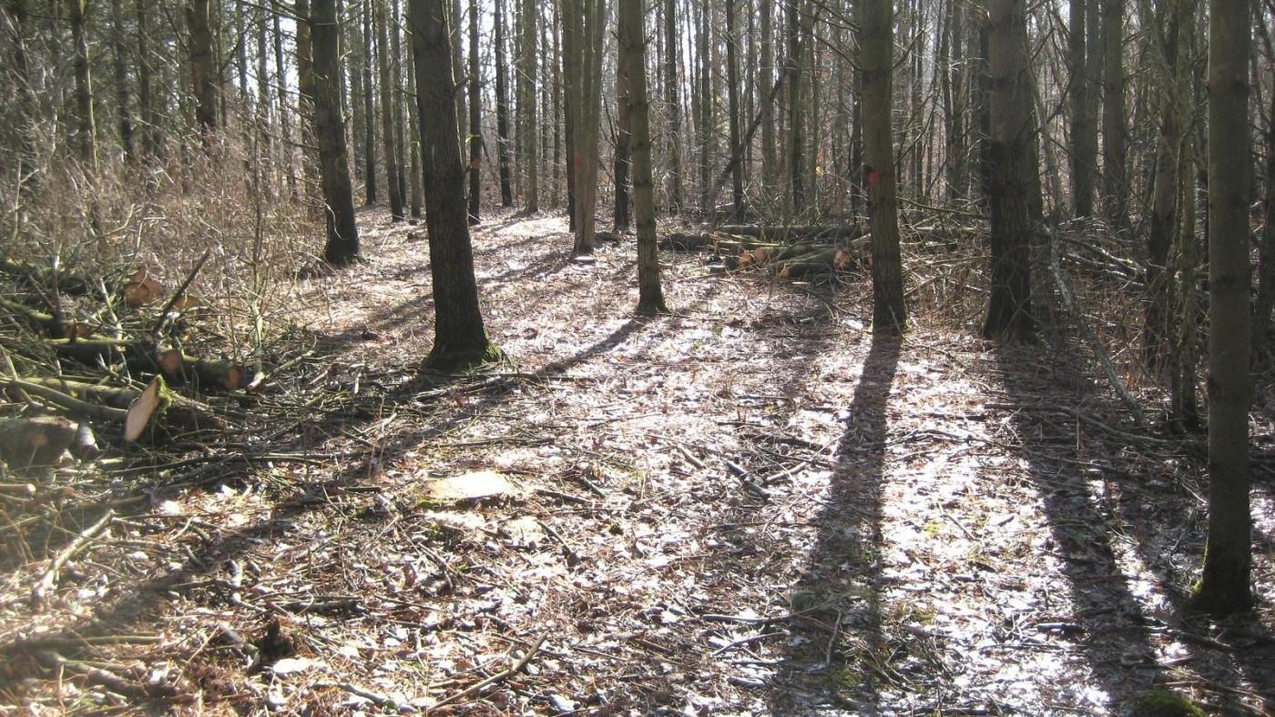Hedley Trail late fall