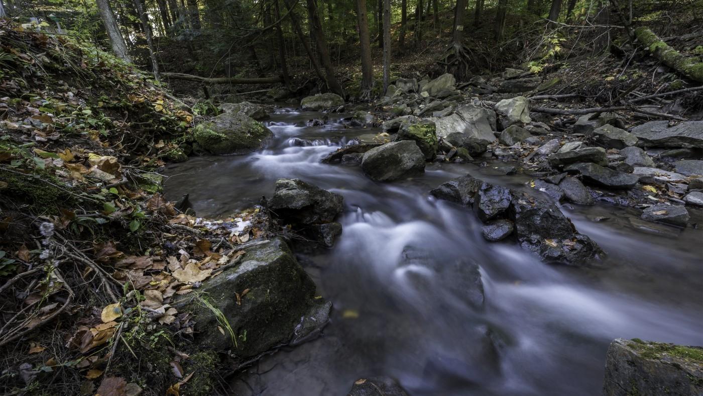 Photo of twelve mile creek