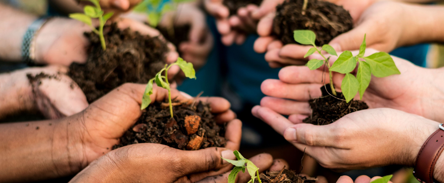 Hands in a circle holding dirt and sprouted plant