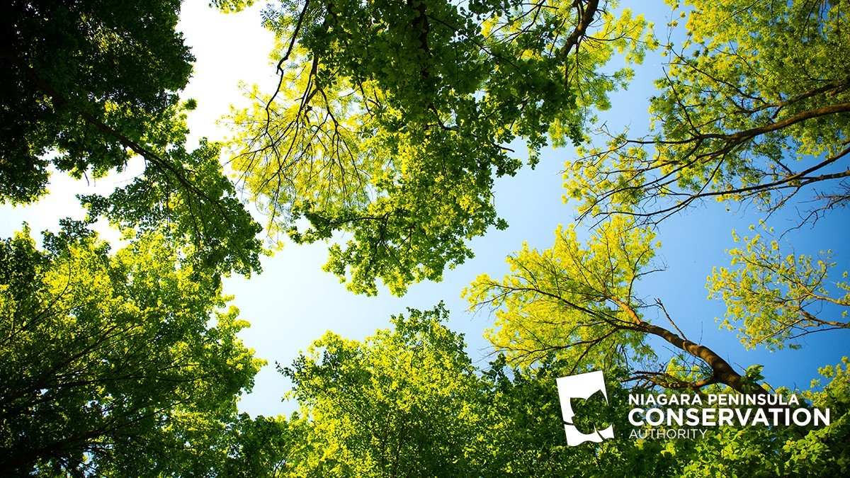 NPCA white logo in photo of blue skies and tall green trees