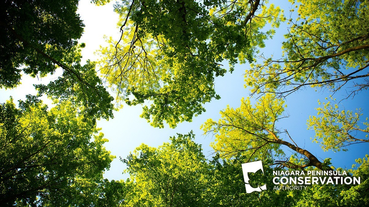 npca loog on background of trees with green leaves and blue skies