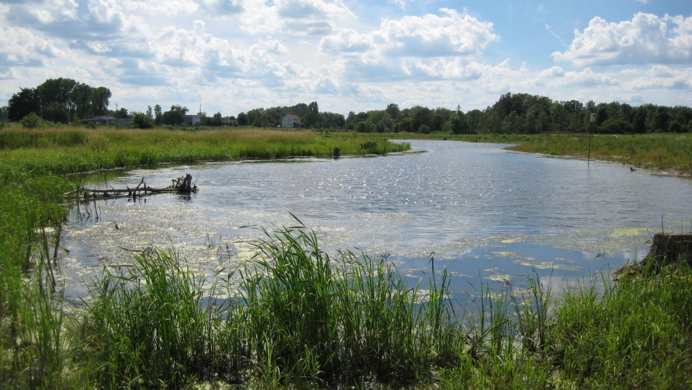 Photo of wetland and greenery at e.c. brown conservation areas