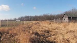 livestock farmland with barn