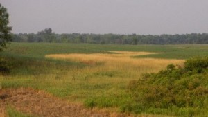 farm crop land agriculture