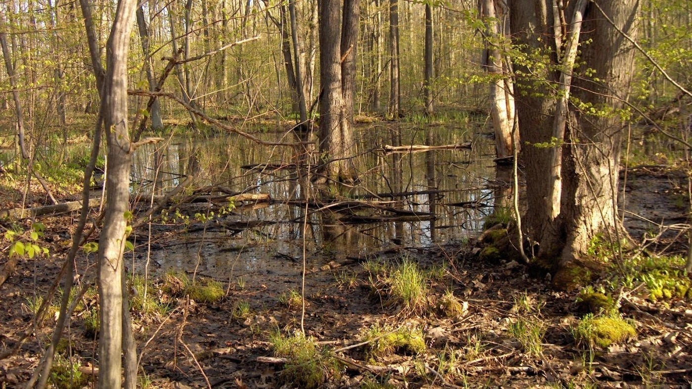photo of hedley slough forest, trees and water