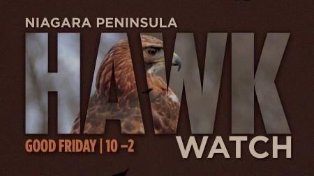 Beamer Hawk typography