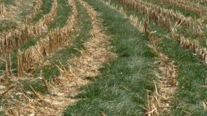crops to promote soil protection and improve nutrients