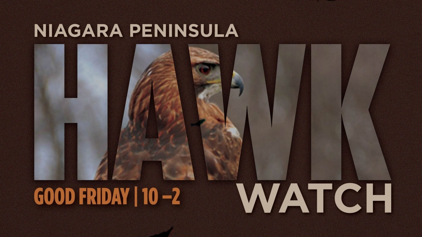 Poster for hawkwatch with hawk in background, brown colour