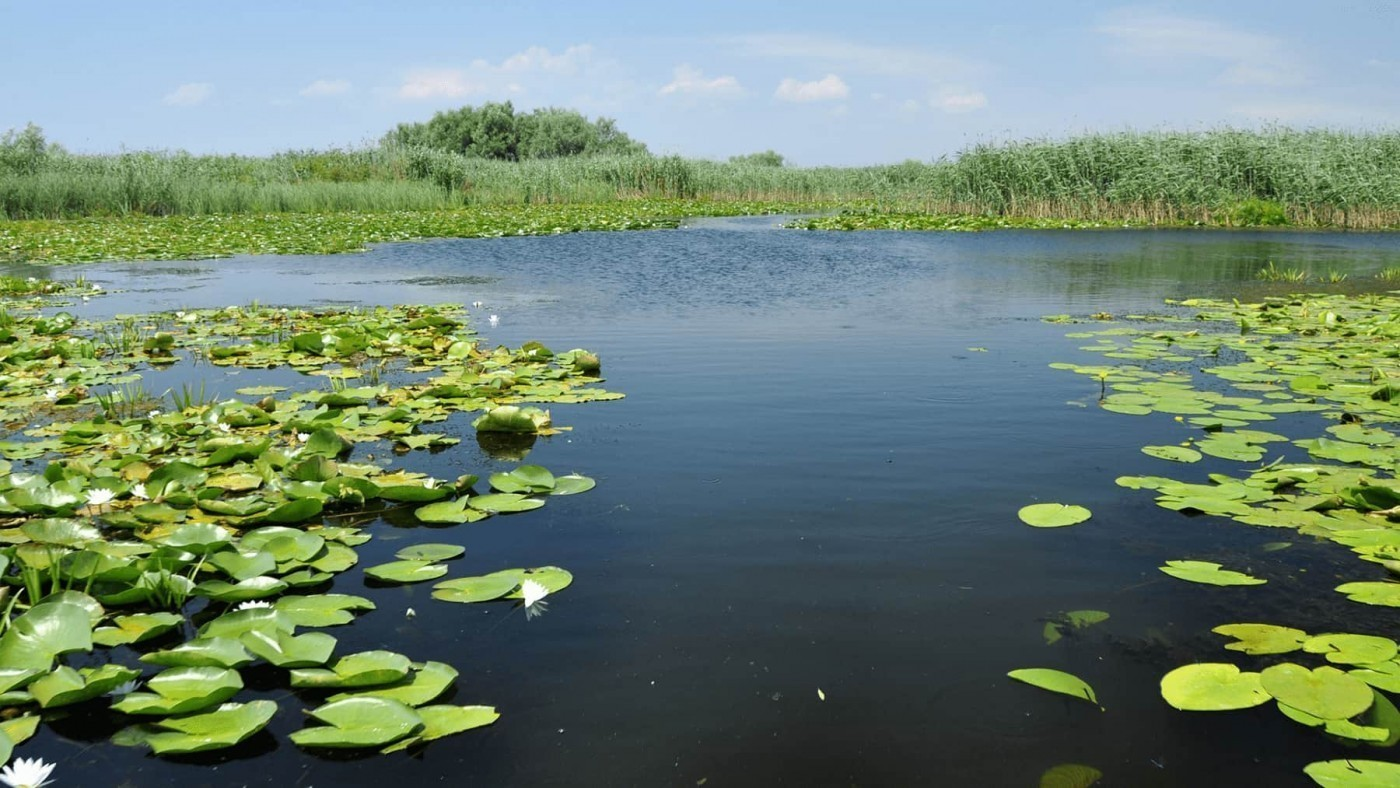 Water and greenery floating, surrounded by green skies