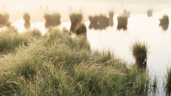 Photo of wetland-land area surrounded by green aquatic plants