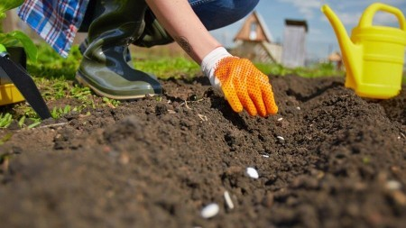 Photo of person planting in soil with orange gloves and yellow watering can