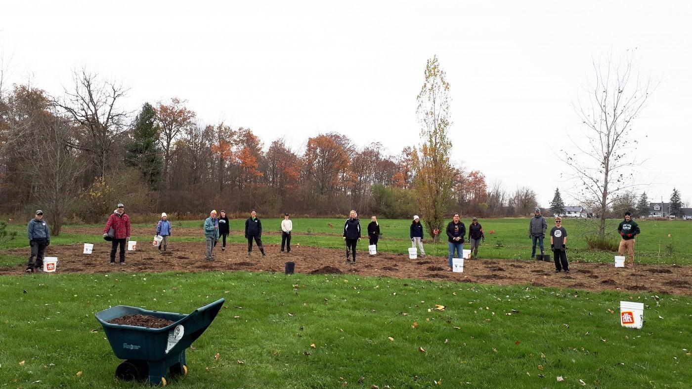 restoration planting with volunteers November 2020