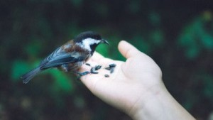 Hand, holding and feeding bird