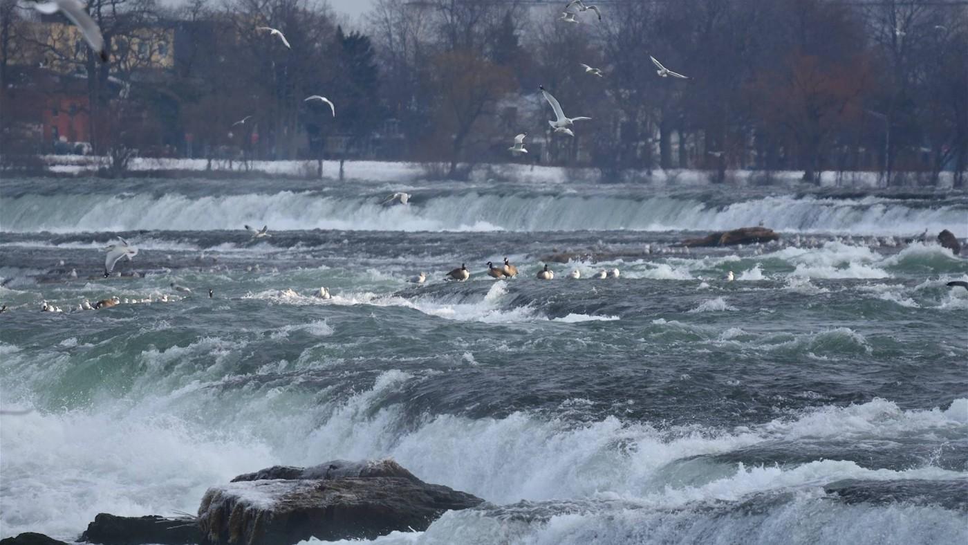 Niagara Falls winter birds, flowing falls and warm blue skies