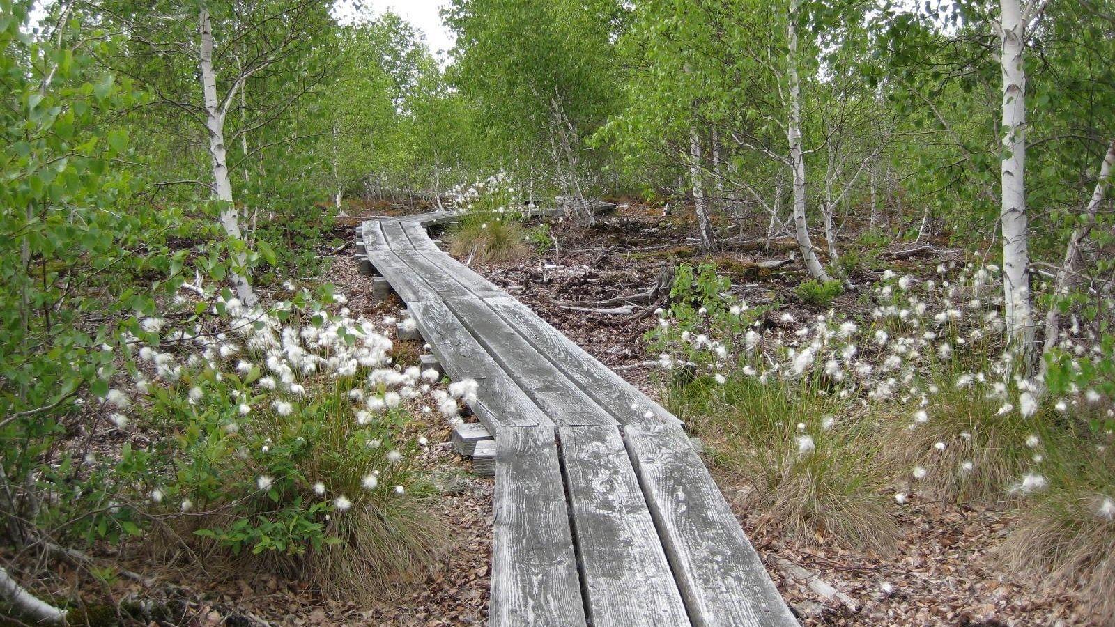 wainfleet bog summer nature