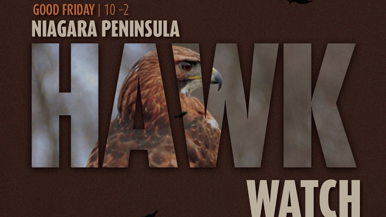 Poster of Hawkwatch event, featuring a big hawk