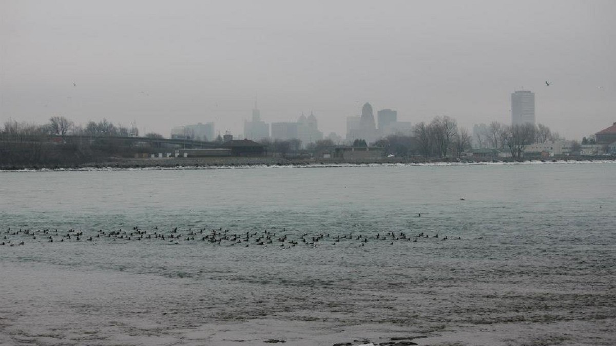 Winter scenery in Niagara Falls, surrounded by grey skies and winter birds